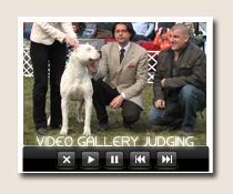 Dog show judge around the world